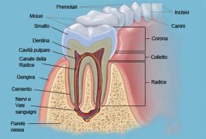 anatomia dentale